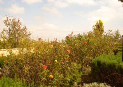 roses-Damas